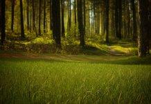 โซนิค อินเตอร์เฟรท ปลุกป่า